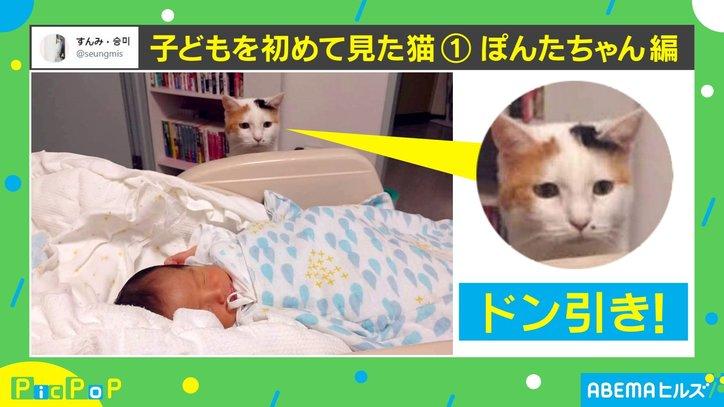 未知との遭遇…!赤ちゃんと初対面した猫の反応がTwitterで話題「なんとも味のある表情」