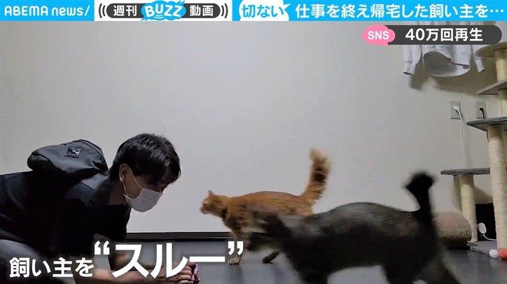 """2匹の猫が飼い主に""""想定外""""の仕打ち 切なすぎる結末に「立ち直れない」同情の声"""