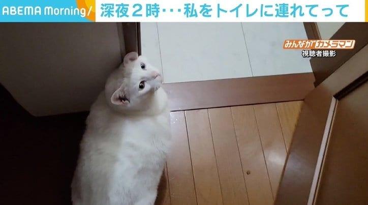 """暗い廊下を先導、ドアを開け目配せも 飼い主の""""夜中のトイレ""""を案内する猫 「不思議なんですけど」"""