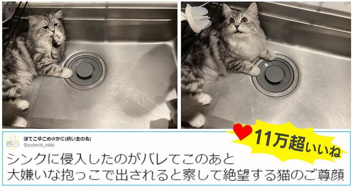 """「見つかったニャ!」台所のシンク、洗濯カゴ…侵入しまくる猫の""""表情""""が話題"""