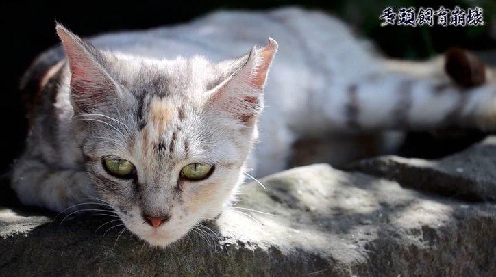 """「2匹の猫が30匹に…」社会的孤立、高齢化、貧困問題が生む""""多頭飼育崩壊""""の現実"""