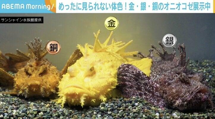 """水族館にある""""3色のメダル""""? 金・銀・銅の「オニオコゼ」が話題 東京・池袋"""